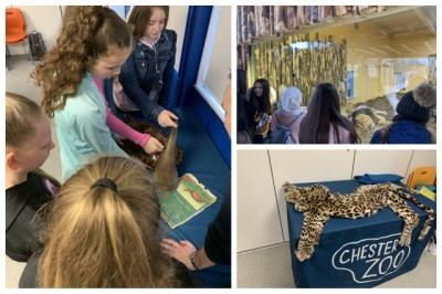 Year 8 Study Conservation at Chester Zoo